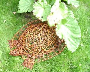 Schildpad op een bedje van groen