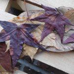 Een herfstkrans van bladeren