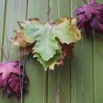 Allemaal bladeren